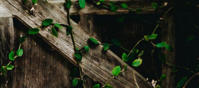 Tips voor 365 dagen groen in je tuin
